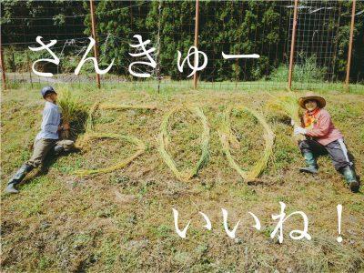 祝!500いいね!