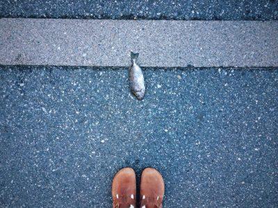 トンビが大事なものを落としていきました。