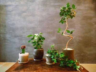 植物のお友達が増えました
